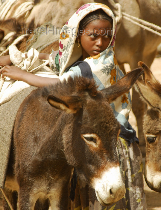 eritrea64: Eritrea - Senafe, Southern region: girl unloading her donkeys at the market - Saho people - photo by E.Petitalot - (c) Travel-Images.com - Stock Photography agency - Image Bank