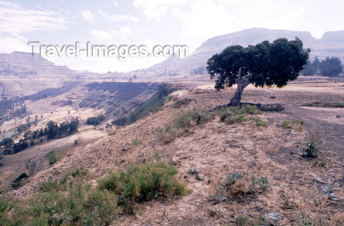 eritrea90: Eritrea - on the plateau - solitary tree - photo by Joe Filshie - (c) Travel-Images.com - Stock Photography agency - Image Bank