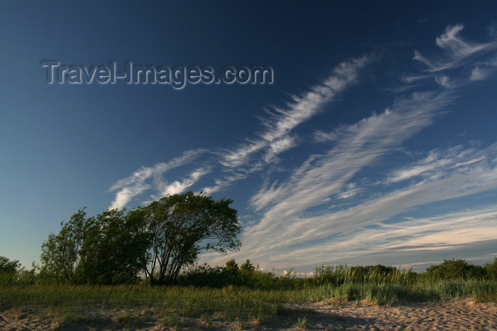estonia152: Estonia - Parnu: Trees and Sky - photo by K.Hagen - (c) Travel-Images.com - Stock Photography agency - Image Bank