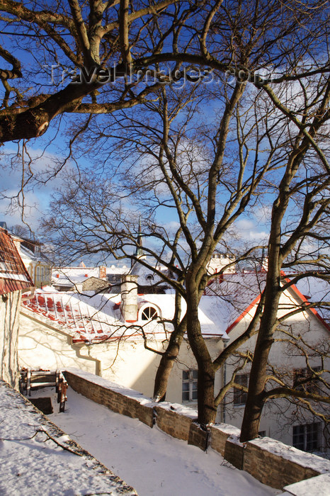 estonia161: Estonia - Tallinn - Old Town - Komandandi Overlook - trees, roofs and snow - photo by K.Hagen - (c) Travel-Images.com - Stock Photography agency - Image Bank