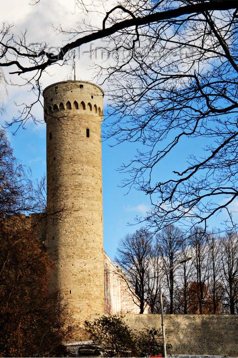 estonia171: Estonia - Tallinn - Old Town - Pikk Hermann / Tall Hermann Tower framed by trees - photo by K.Hagen - (c) Travel-Images.com - Stock Photography agency - Image Bank