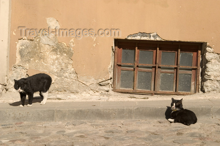 estonia70: Estonia - Tallinn: stray cats in the old town - photo by C.Schmidt - (c) Travel-Images.com - Stock Photography agency - Image Bank