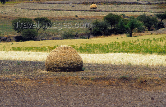 ethiopia155: Lalibela, Amhara region, Ethiopia: agriculture - stacked hay - Semien Wollo Zone - photo by M.Torres - (c) Travel-Images.com - Stock Photography agency - Image Bank