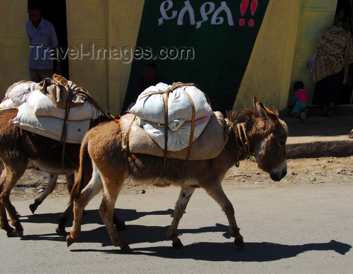 ethiopia210: Gondar, Amhara Region, Ethiopia: donkeys on head ot the Merkato - photo by M.Torres - (c) Travel-Images.com - Stock Photography agency - Image Bank