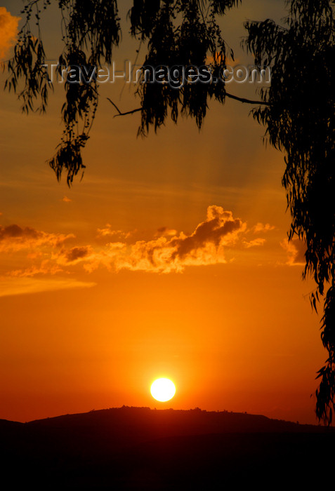 ethiopia237: Gondar, Amhara Region, Ethiopia: sunset and eucalyptus - photo by M.Torres - (c) Travel-Images.com - Stock Photography agency - Image Bank