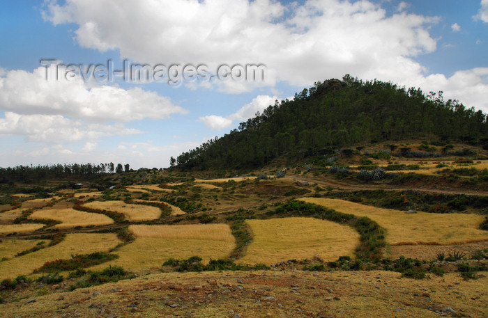 ethiopia331: Axum - Mehakelegnaw Zone, Tigray Region: terraced fields - agriculture - photo by M.Torres - (c) Travel-Images.com - Stock Photography agency - Image Bank