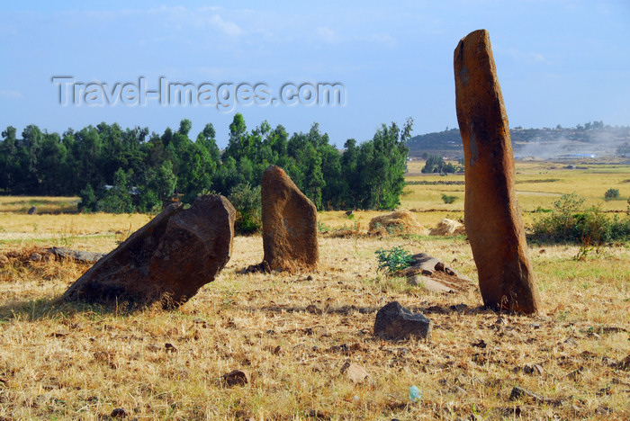 ethiopia351: Axum - Mehakelegnaw Zone, Tigray Region: Gudit stelae field,  reputed to contain the tomb of the Queen of Sheba - photo by M.Torres - (c) Travel-Images.com - Stock Photography agency - Image Bank