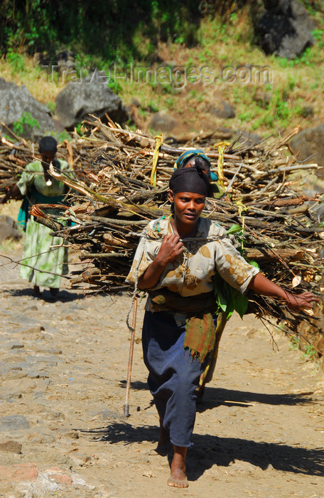 ethiopia443: Tis Issat, Amhara, Ethiopia: women carry wood - photo by M.Torres - (c) Travel-Images.com - Stock Photography agency - Image Bank