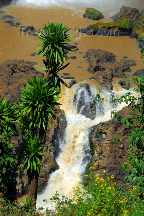 ethiopia445: Blue Nile Falls - Tis Issat, Amhara, Ethiopia: pond and lower falls - photo by M.Torres - (c) Travel-Images.com - Stock Photography agency - Image Bank