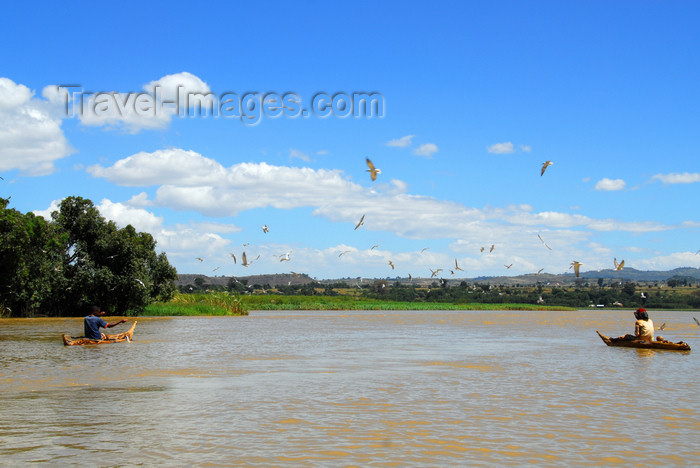 ethiopia497: Lake Tana, Amhara, Ethiopia: outlet of the Blue Nile, the Abay - the river heads south and then west towards Sudan  - photo by M.Torres  - (c) Travel-Images.com - Stock Photography agency - Image Bank