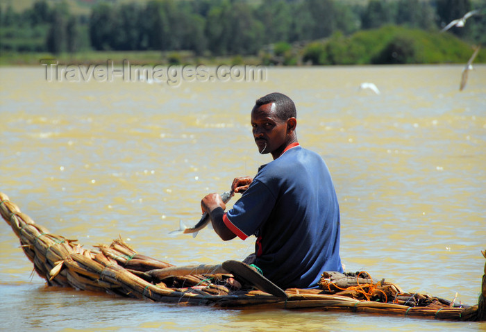 ethiopia498: Lake Tana, Amhara, Ethiopia: fisherman at the outlet of the Blue Nile, the Abay - traditional boat - low-floating papyrus canoe, called tangwa - photo by M.Torres  - (c) Travel-Images.com - Stock Photography agency - Image Bank