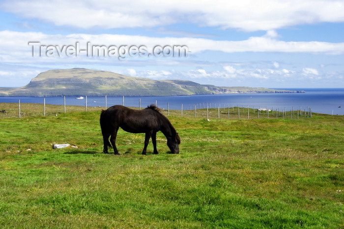 faeroe136: Tórshavn, Streymoy island, Faroes: horse grazing and Nolsoy island in the background - photo by A.Ferrari - (c) Travel-Images.com - Stock Photography agency - Image Bank