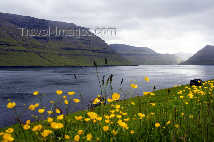 faeroe162: Kunoy island, Norðoyar, Faroes: seen from Kalsoy - flowers and the Kalsoyarfjørður - photo by A.Ferrari - (c) Travel-Images.com - Stock Photography agency - Image Bank