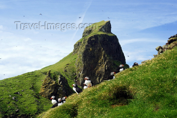 faeroe44: Mykines island, Faroes: cliff and puffins - photo by A.Ferrari - (c) Travel-Images.com - Stock Photography agency - Image Bank