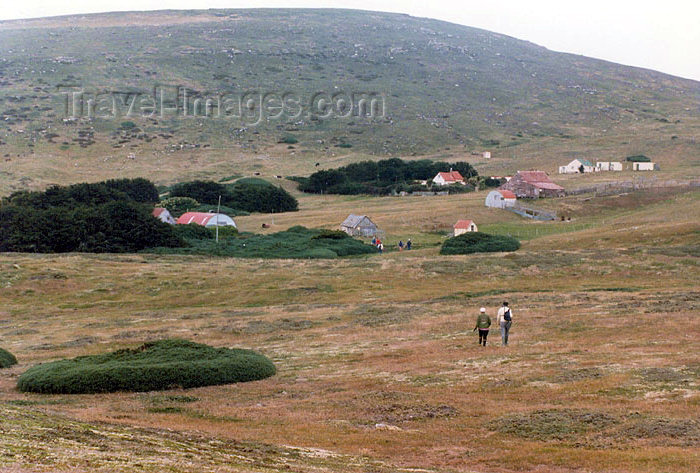 falkland18: Falkland islands / Ilhas Malvinas - Carcass Island: Rob McGill settlement - walk over the sponge turf (photo by G.Frysinger) - (c) Travel-Images.com - Stock Photography agency - Image Bank