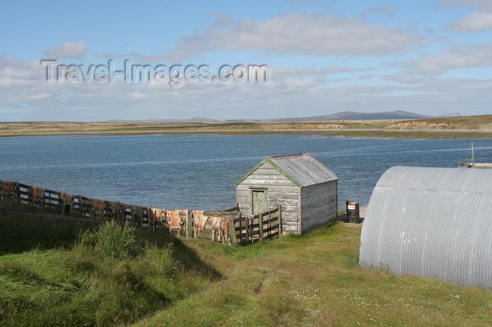 falkland33: Falkland islands - East Falkland - Port Louis - sheep skins - photo by Christophe Breschi - (c) Travel-Images.com - Stock Photography agency - Image Bank