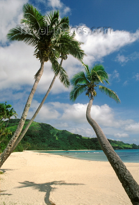 fiji24: Nacula Island, Yasawa group, Fiji: perfect tropical beach, tranquil scenario - white sand, coconut trees and turquoise water - photo by C.Lovell - (c) Travel-Images.com - Stock Photography agency - Image Bank