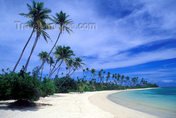 fiji3: Malolo Lailai island, Viti Levu, Fiji: a beautiful white sand beach lined with coconut trees on the resort island of Malolo Lailai off the coast of Viti Levu - photo by C.Lovell - (c) Travel-Images.com - Stock Photography agency - Image Bank