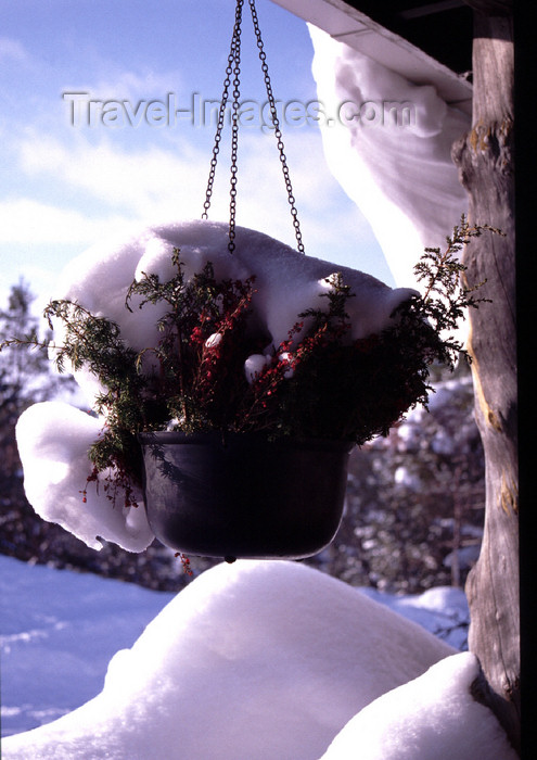 fin38: Finland - Lapland - Saarselkä - flower vase in the snow - Arctic images by F.Rigaud - (c) Travel-Images.com - Stock Photography agency - Image Bank
