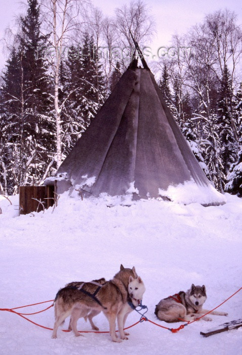fin46: Finland - Lapland: kota, a Sami tent and huskies (photo by F.Rigaud) - (c) Travel-Images.com - Stock Photography agency - Image Bank