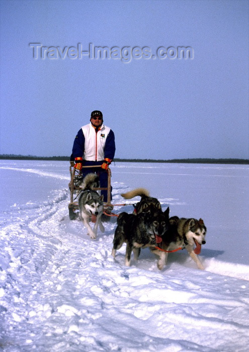 fin52: Finland - Lapland: huskies and sledge - dogsled (photo by F.Rigaud) - (c) Travel-Images.com - Stock Photography agency - Image Bank