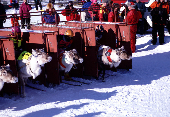 fin92: Finland - Lapland - Ivalo, Inari municipality - Reindeer races - departure - Arctic images by F.Rigaud - (c) Travel-Images.com - Stock Photography agency - Image Bank