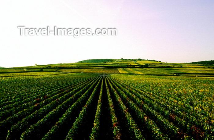 france1036: Burgundy / Bourgogne, France: endless vineyards - photo by K.Gapys - (c) Travel-Images.com - Stock Photography agency - Image Bank