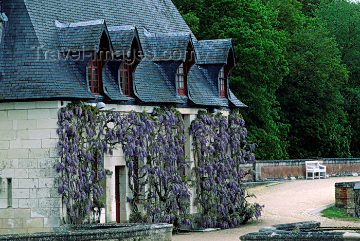 france1076: Chenonceaux, Indre-et-Loire, Centre, France: Château de Chenonceau caretakers' cottage - purple wisteria - Loire Valley - photo by C.Lovell - (c) Travel-Images.com - Stock Photography agency - Image Bank