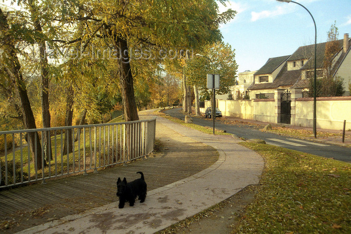 france1139: La Varenne, Val-de-Marne, Ile-de-France: dog and cycleway - photo by Y.Baby - (c) Travel-Images.com - Stock Photography agency - Image Bank