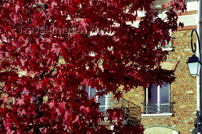 france1149: La Varenne, Val-de-Marne, Ile-de-France: autumn leaves - photo by Y.Baby - (c) Travel-Images.com - Stock Photography agency - Image Bank