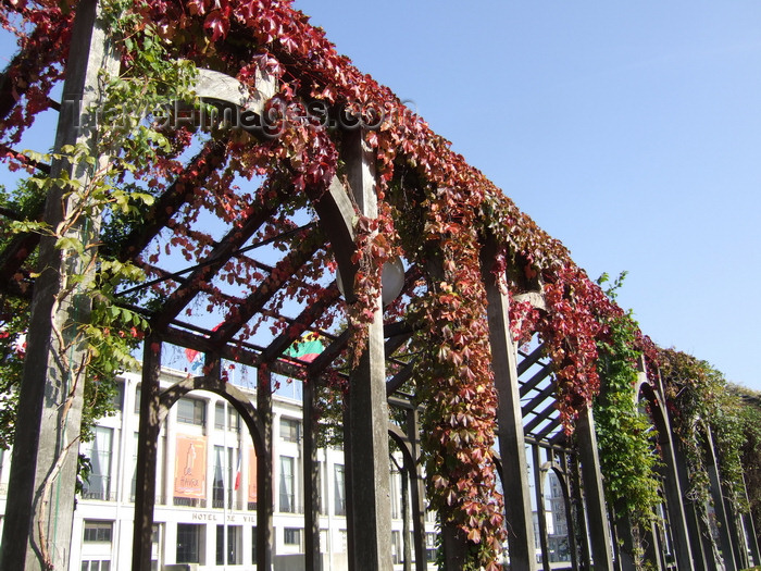 france1265: Le Havre, Seine-Maritime, Haute-Normandie, France: ivy on a pergola - Normandy - photo by A.Bartel - (c) Travel-Images.com - Stock Photography agency - Image Bank