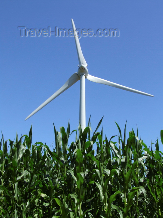 france1393: Haute-Normandie, France: wind turbine and maize field – wind power plant and corn production - photo by A.Bartel - (c) Travel-Images.com - Stock Photography agency - Image Bank