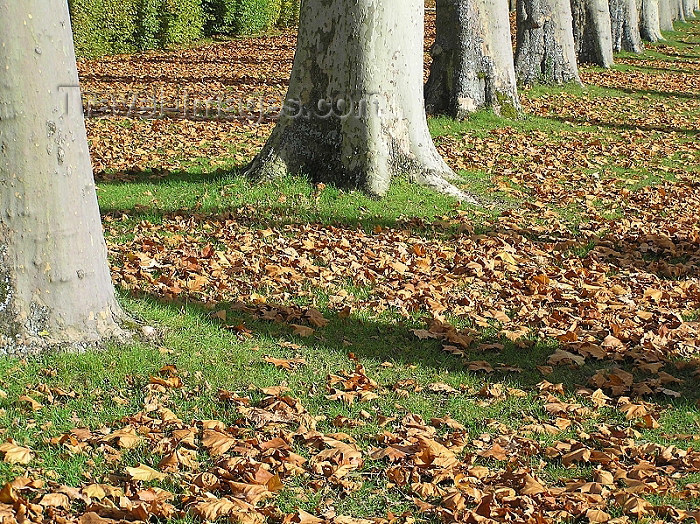 france252: France - Versailles (Yvelines): Autumn - fallen leaves - photo by J.Kaman - (c) Travel-Images.com - Stock Photography agency - Image Bank