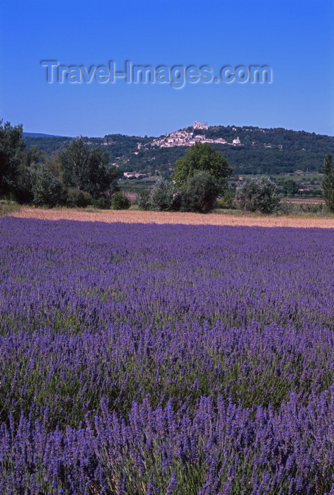 france91: Lacoste, Vaucluse, PACA, France: lavender field - Lavandula angustifolia cultivar used extensively in herbalism - flowering plants in the mint family - Les Monts de Vaucluse - photo by A.Bartel - (c) Travel-Images.com - Stock Photography agency - Image Bank