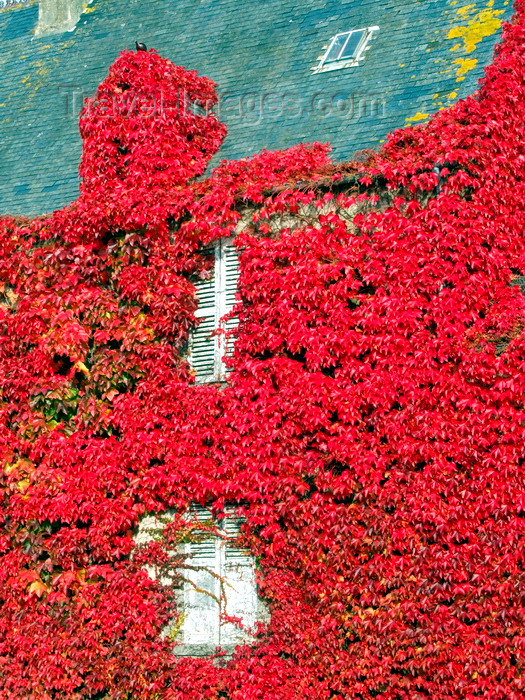 france969: Carentan, Manche, Basse-Normandie, France: house clad in red ivy - town outskirts - photo by A.Bartel - (c) Travel-Images.com - Stock Photography agency - Image Bank