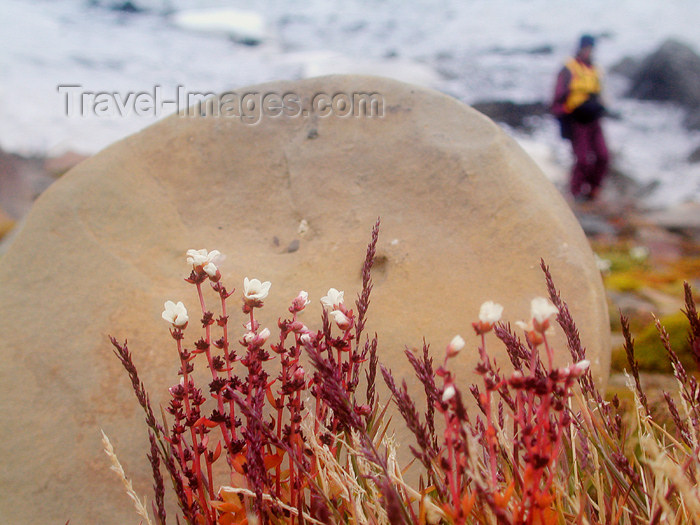 franz-josef78: Franz Josef Land Spherical boulder & wildflowers, Champ Island - Arkhangelsk Oblast, Northwestern Federal District, Russia - photo by Bill Cain - (c) Travel-Images.com - Stock Photography agency - Image Bank