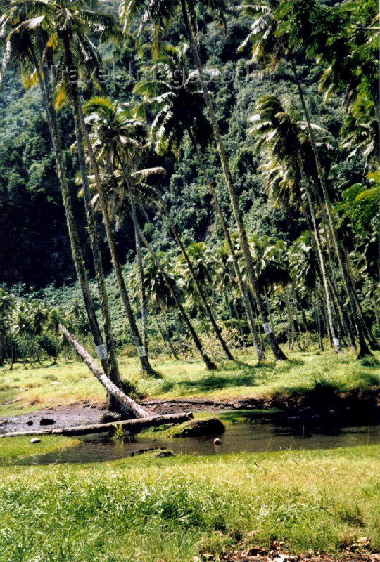 french-polynesia1: French Polynesia - Tahiti (Society islands, iles du vent): rainforest near Teahupoo - photo by K.Pajta - (c) Travel-Images.com - Stock Photography agency - Image Bank