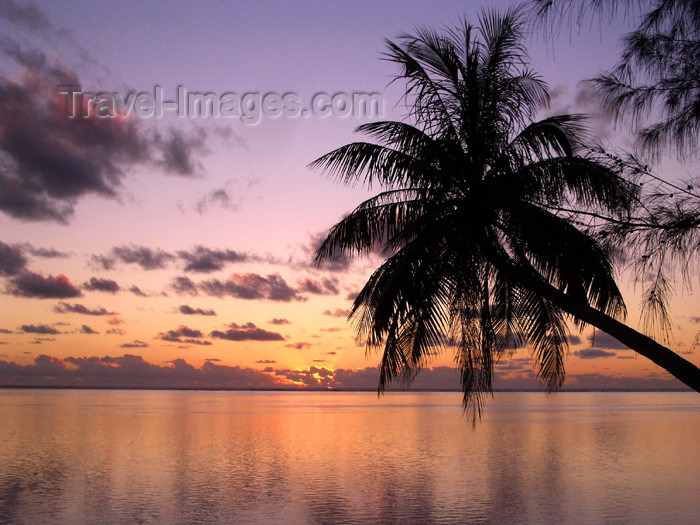 french-polynesia26: French Polynesia - Moorea / MOZ (Society islands, iles du vent): Polynesian palm in the evening - photo by R.Ziff - (c) Travel-Images.com - Stock Photography agency - Image Bank