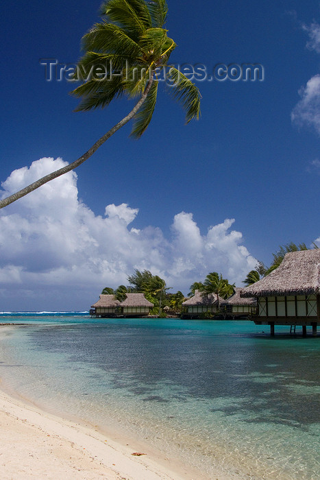 french-polynesia3: Papetoai, Moorea, French Polynesia: InterContinental Hotel - coconut tree over a perfect white sand beach - tropical resort - photo by D.Smith - (c) Travel-Images.com - Stock Photography agency - Image Bank