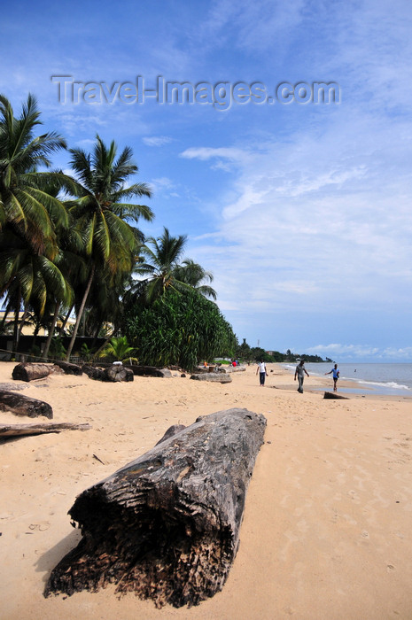 gabon17: Libreville, Estuaire Province, Gabon: rainforest log on the sand - abandoned by the the local timber industry after being washed ashore - Tropicana beach - Quartier Tahiti - photo by M.Torres - (c) Travel-Images.com - Stock Photography agency - Image Bank