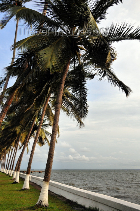 gabon30: Libreville, Estuaire Province, Gabon: coconut trees along the waterfront - Front de Mer - Boulevard de l'Indépendance - photo by M.Torres - (c) Travel-Images.com - Stock Photography agency - Image Bank