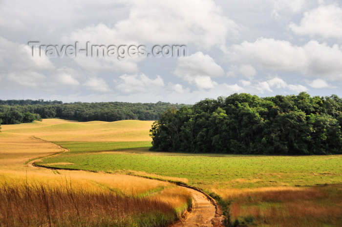 gabon45: Wonga-Wongue reserve, Ogooué-Maritime, Gabon: forest and meadows - photo by M.Torres - (c) Travel-Images.com - Stock Photography agency - Image Bank
