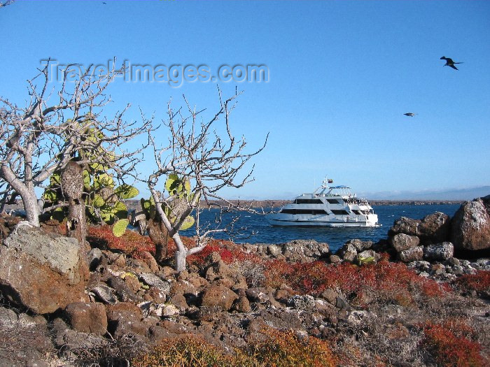 galapagos12: Galapagos Islands: cactus by the coast - photo by R.Eime - (c) Travel-Images.com - Stock Photography agency - Image Bank
