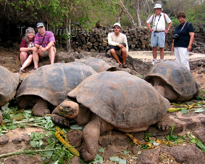 galapagos20: Galapagos Islands: visitors observe very large male giant tortoises at the Charles Darwin Research Station - photo by R.Eime - (c) Travel-Images.com - Stock Photography agency - Image Bank