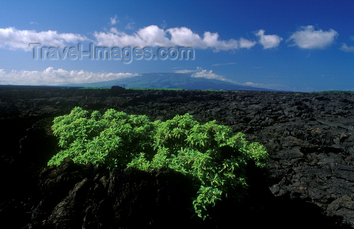 galapagos36: Isla Isabela / Albemarle island, Galapagos Islands, Ecuador: morning sky over the island - vegetation in lava field - Archipiélago de Colón - photo by C.Lovell - (c) Travel-Images.com - Stock Photography agency - Image Bank