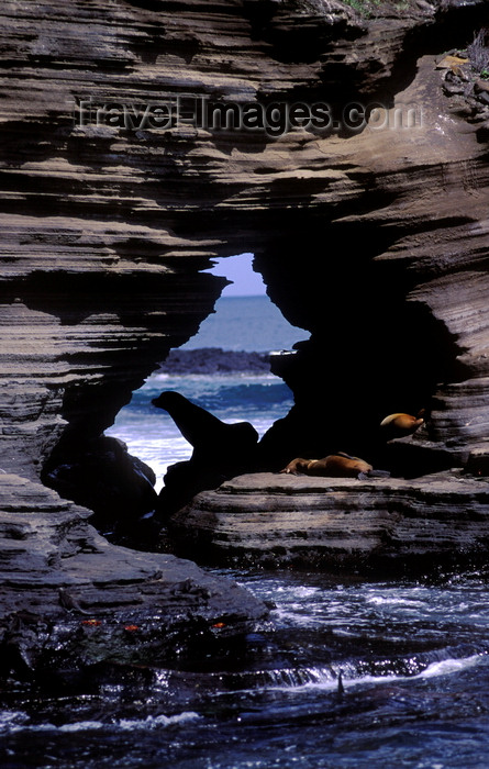 galapagos65: Santiago Island, Galapagos Islands, Ecuador: Sea Lions (Zalophus californianus) framed by rocks in James Bay - rock window - photo by C.Lovell - (c) Travel-Images.com - Stock Photography agency - Image Bank