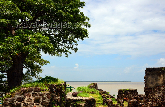 gambia102: James Island / Kunta Kinteh island, The Gambia:  Fort James - baobab and view over the River Gambia - UNESCO world heritage site - photo by M.Torres - (c) Travel-Images.com - Stock Photography agency - Image Bank