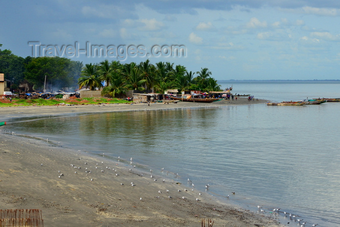 gambia35: Banjul, The Gambia: beach used by birds and fishermen - traditional wooden fishing boats - cove on the River Gambia estuary - photo by M.Torres - (c) Travel-Images.com - Stock Photography agency - Image Bank
