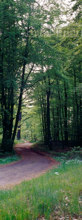 germany368: Eisenach, Thuringia, Germany: road in the forest near Wartburg Castle - Thuringian Forest - photo by A.Harries - (c) Travel-Images.com - Stock Photography agency - Image Bank