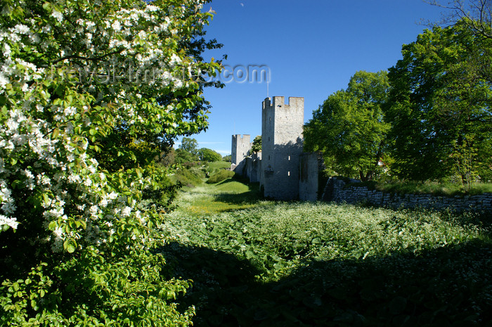 gotland83: Gotland - Visby: trees and the northern wall - ringwall - photo by A.Ferrari - (c) Travel-Images.com - Stock Photography agency - Image Bank
